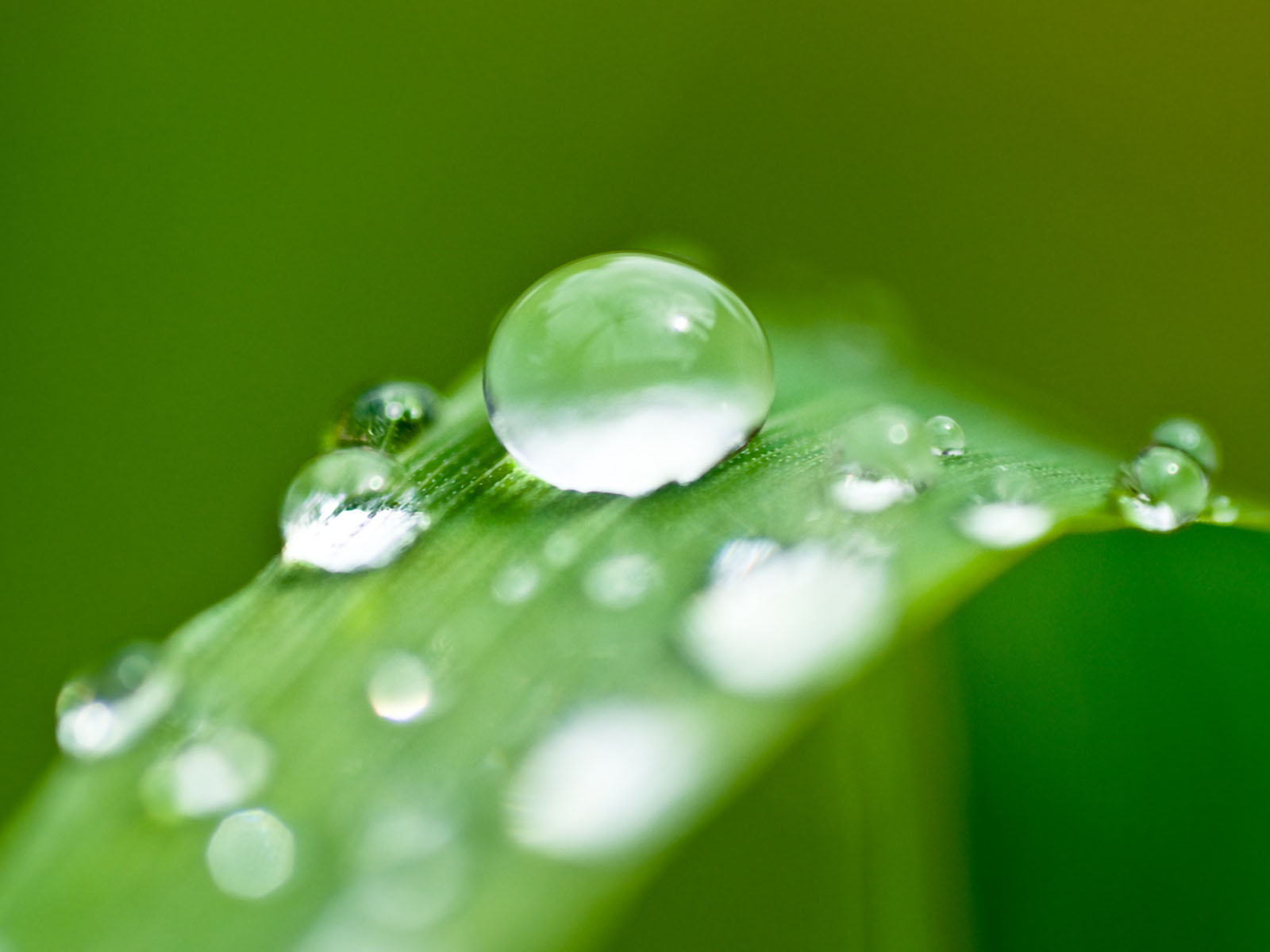 Drawn water droplets leave Water Wallpapers Leaf Drops resolution