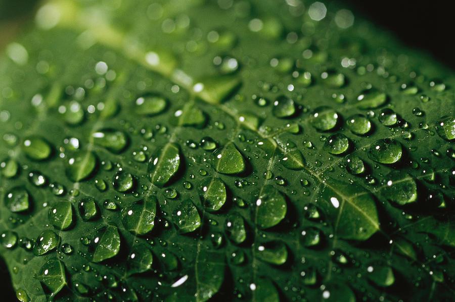 Drawn water droplets leave Drawing Drawing Leaf Drop Leaf