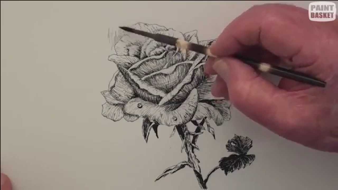 Drawn rose pen drawing Draw pen & & in