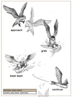 Drawn weapon guardians ga hoole Owls best of on images