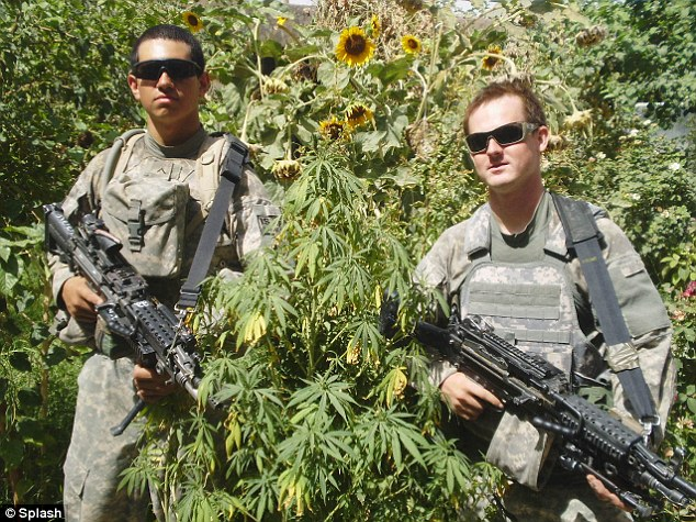 Drawn weed army Com when Daily in America