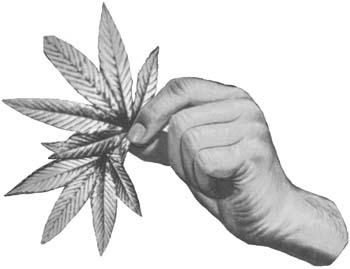 Drawn weed hemp leaf We hemp # #stoner #stoner