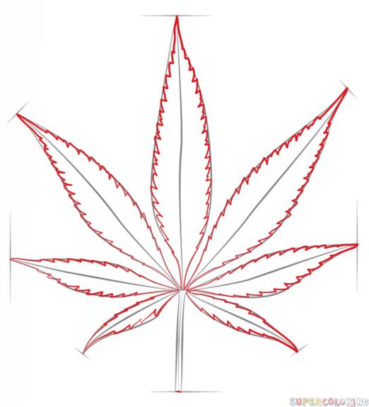 Drawn weed leaf outline Step potleaf 4 draw to