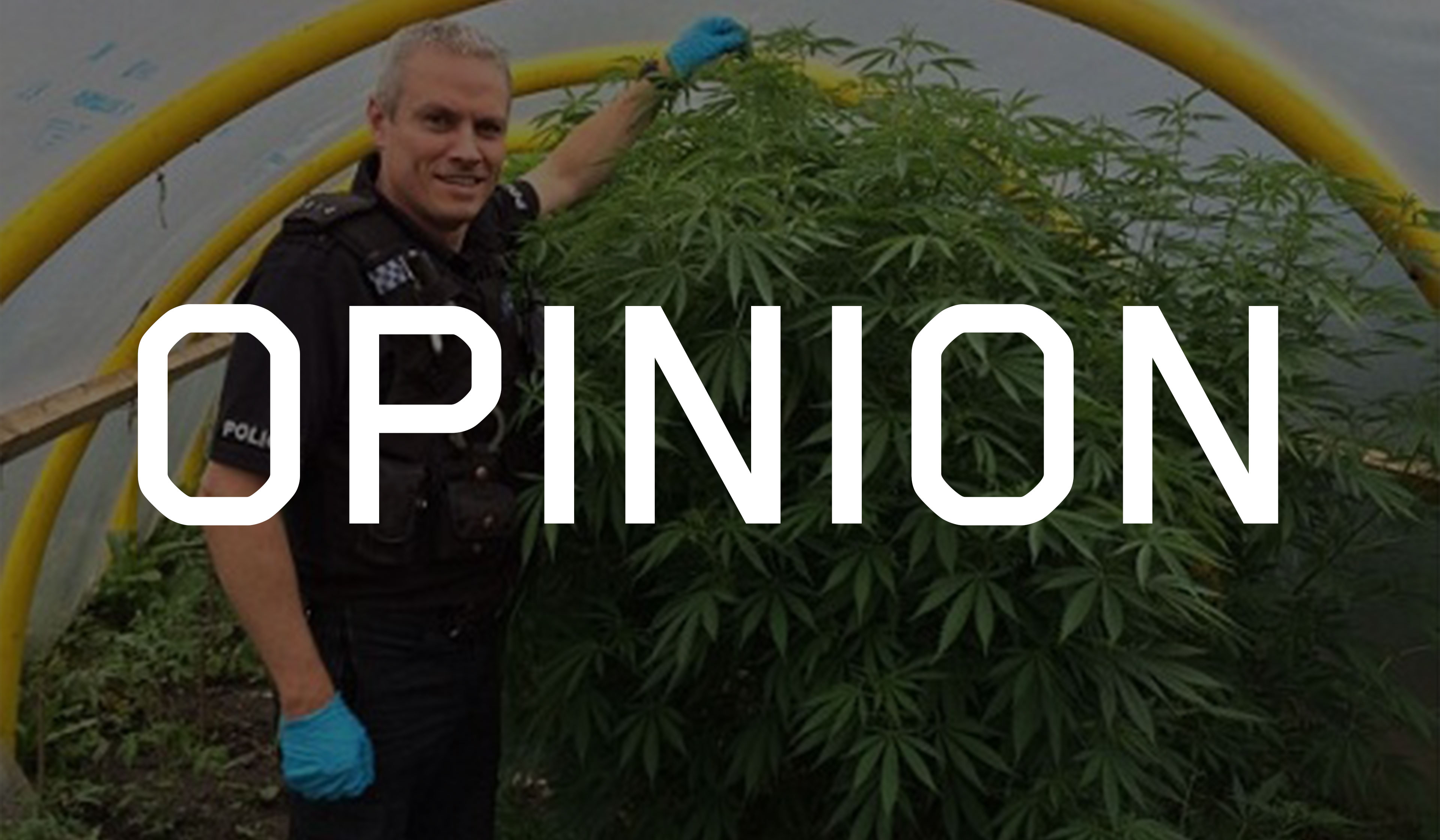 Drawn weed police Finally wise because because about