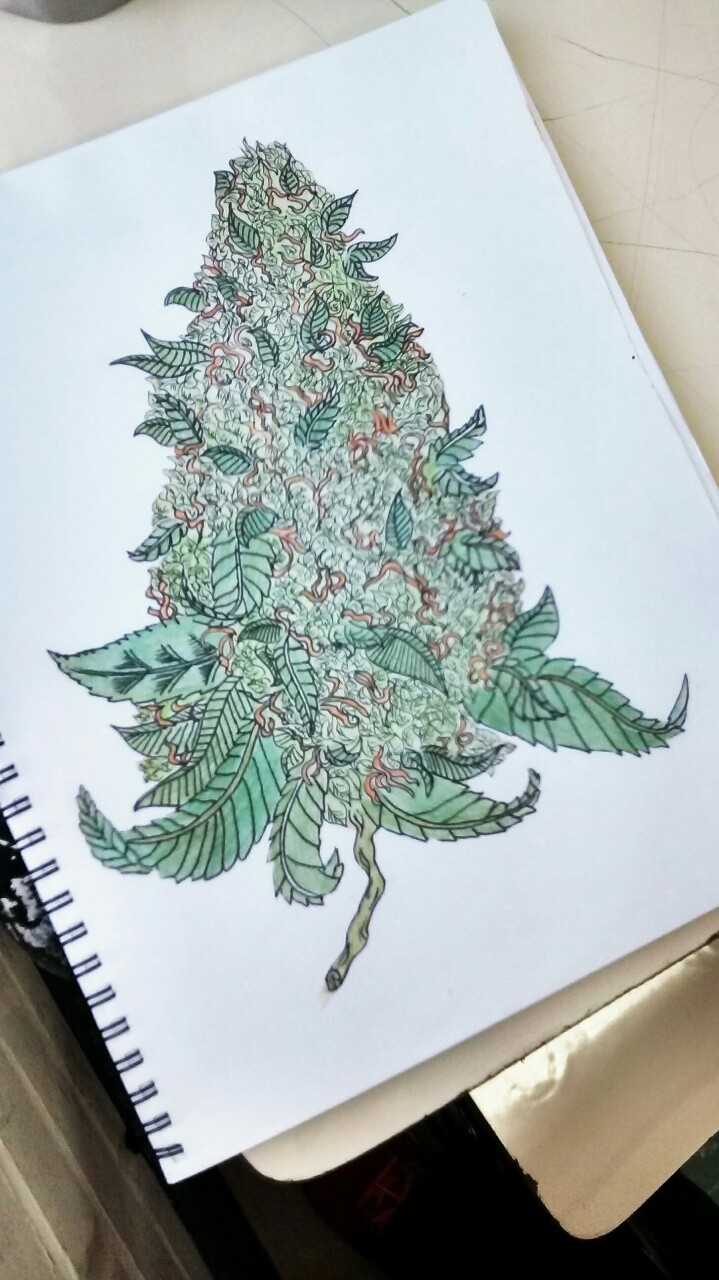 Drawn pot plant trippy  Drawings High Weed
