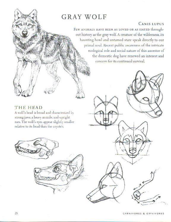 Drawn werewolf anatomy #1