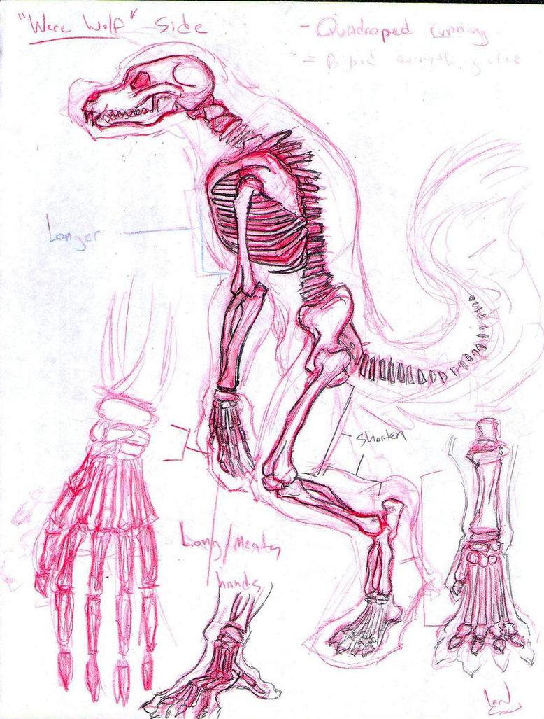 Drawn werewolf anatomy #15