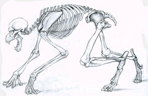 Drawn werewolf anatomy #7