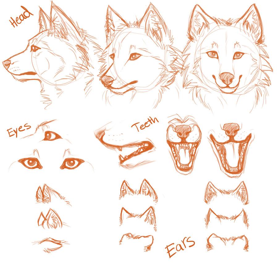 Drawn werewolf anatomy #13
