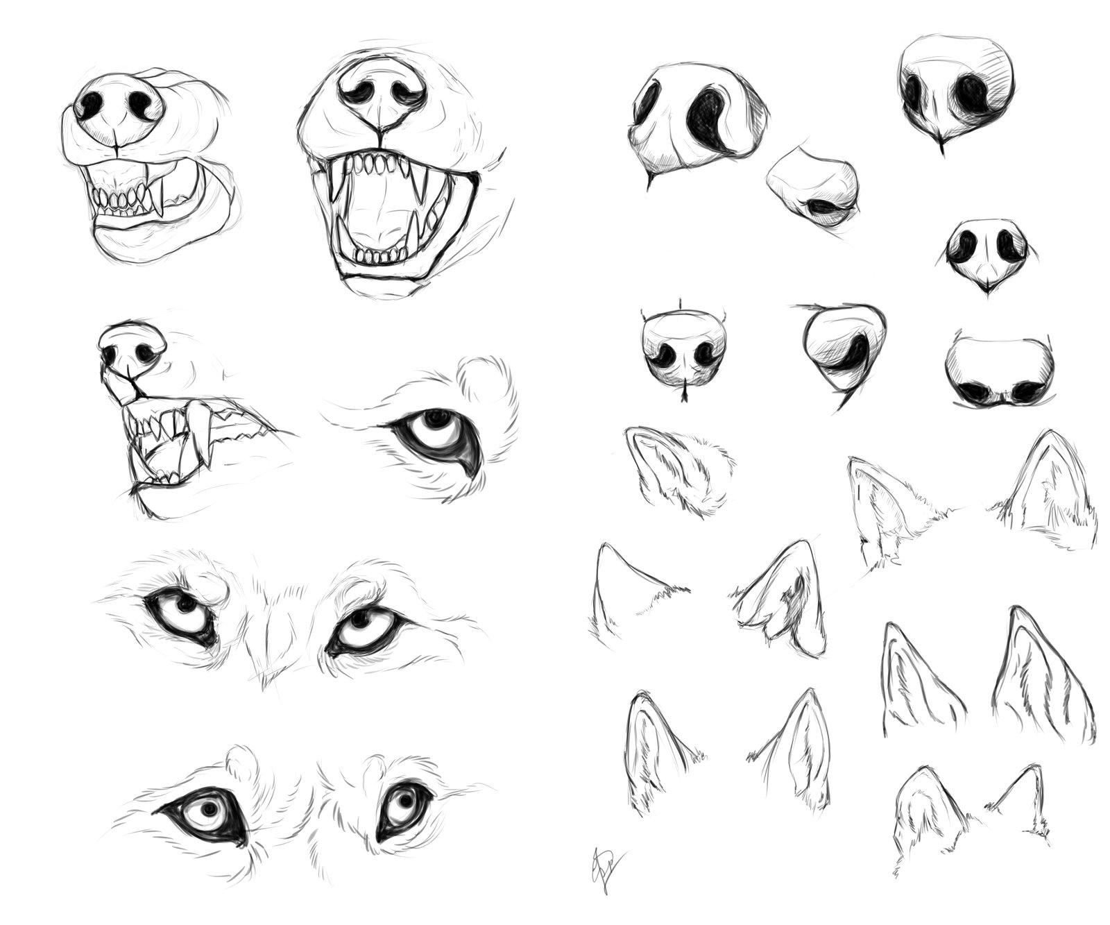 Drawn werewolf anatomy #4