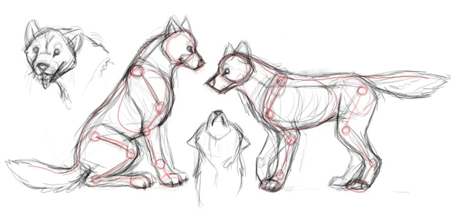 Drawn werewolf anatomy #12