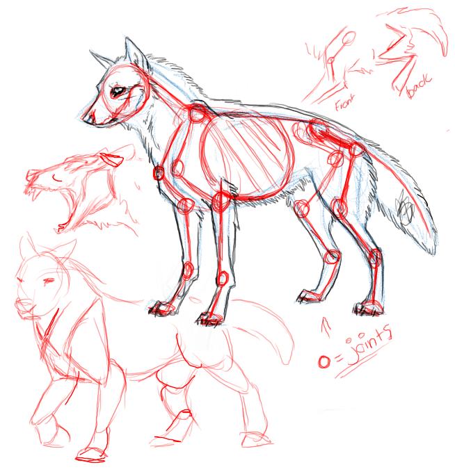 Drawn werewolf anatomy #10