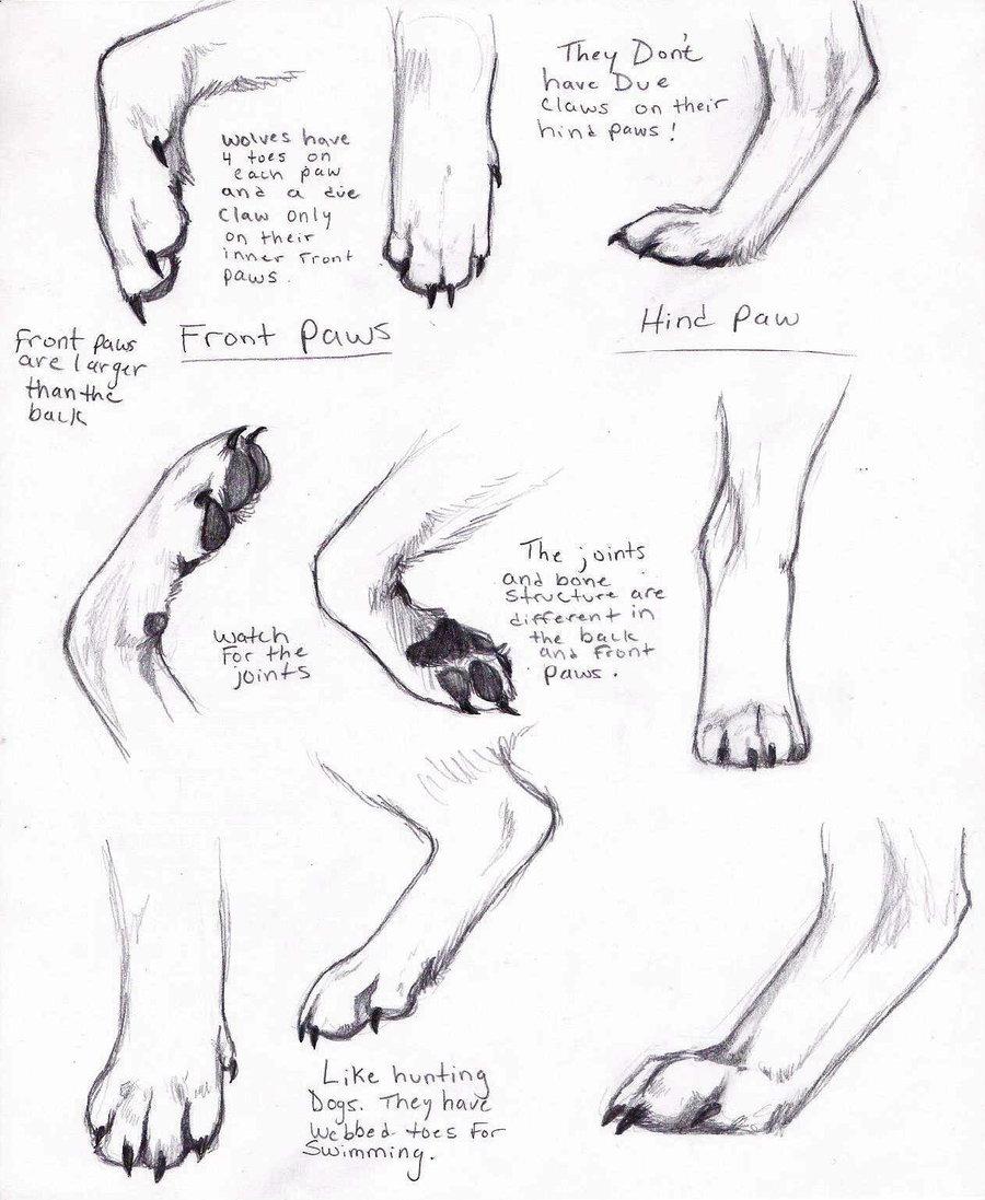 Drawn werewolf anatomy #3