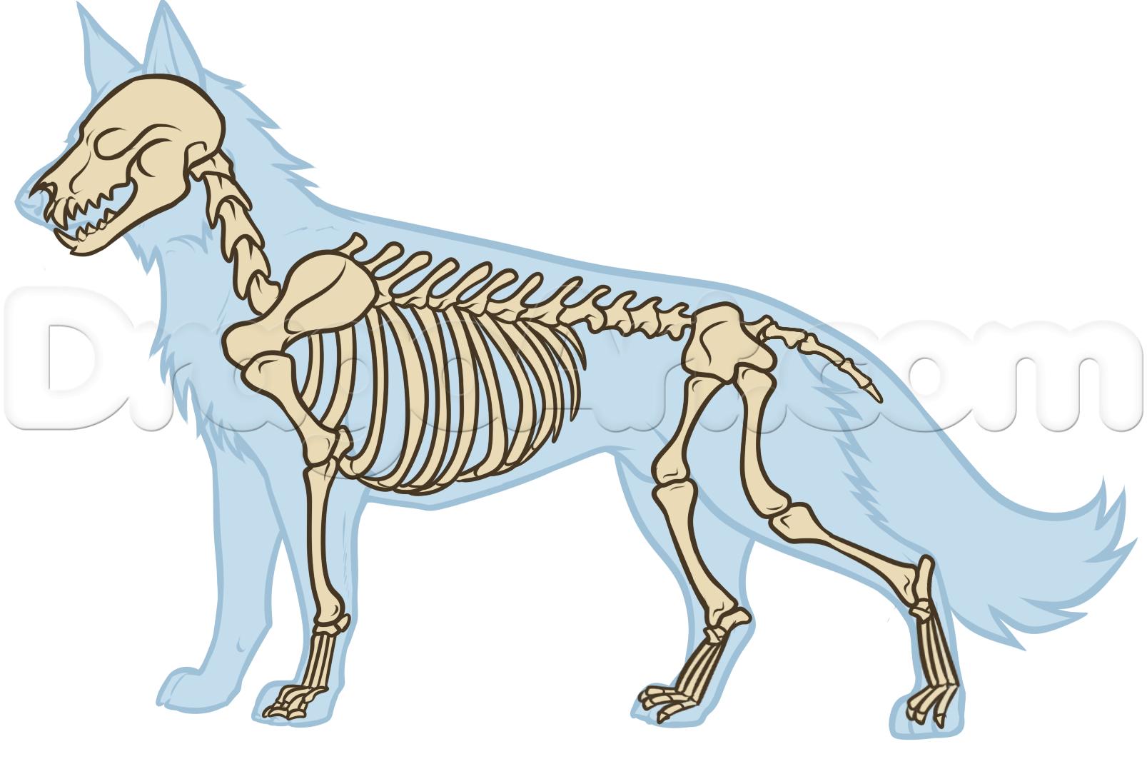 Drawn werewolf anatomy #8