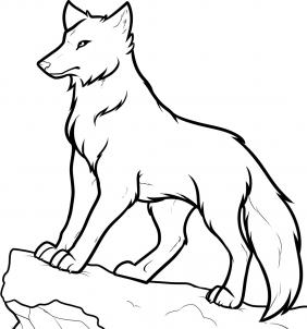 Drawn photos wolf How draw wolves to Step