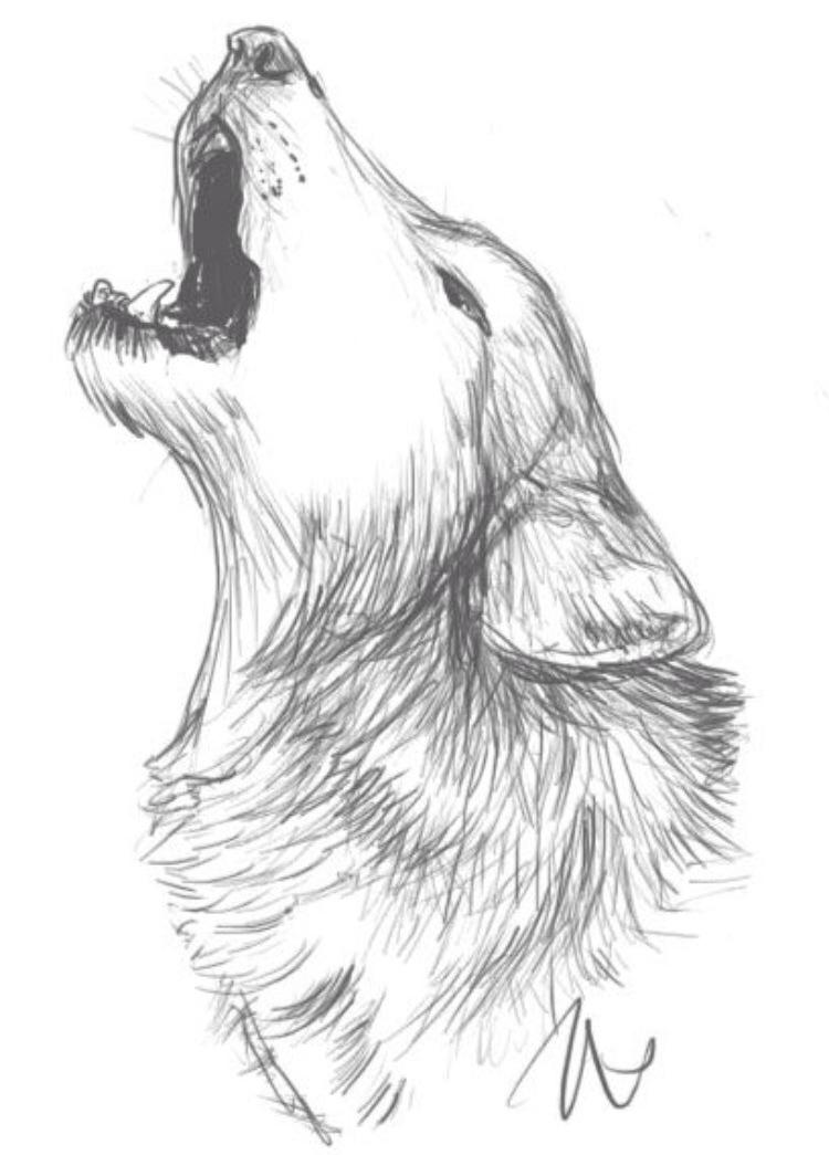 Drawn werewolf artwork Idea a Pinterest Drawings