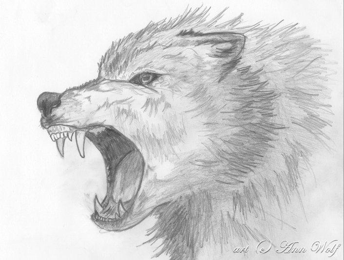Drawn werewolf artwork Pinterest by wolf wolfs Angry