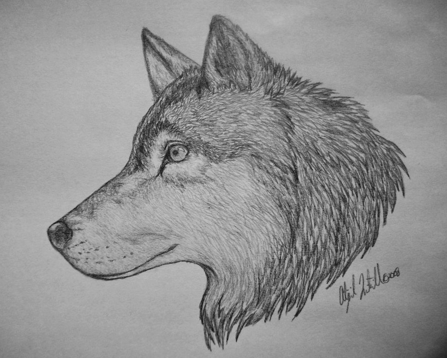 Drawn werewolf awesome Awesome  Related Drawings Wolf