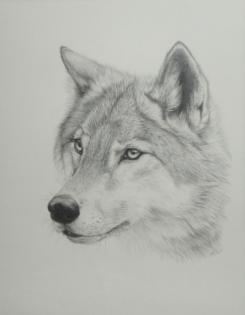 Drawn werewolf awesome Wolf Dr Drawing Wolf Drawing