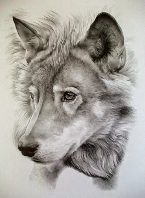 Drawn werewolf awesome Awesome  Photos Pencil Pencil