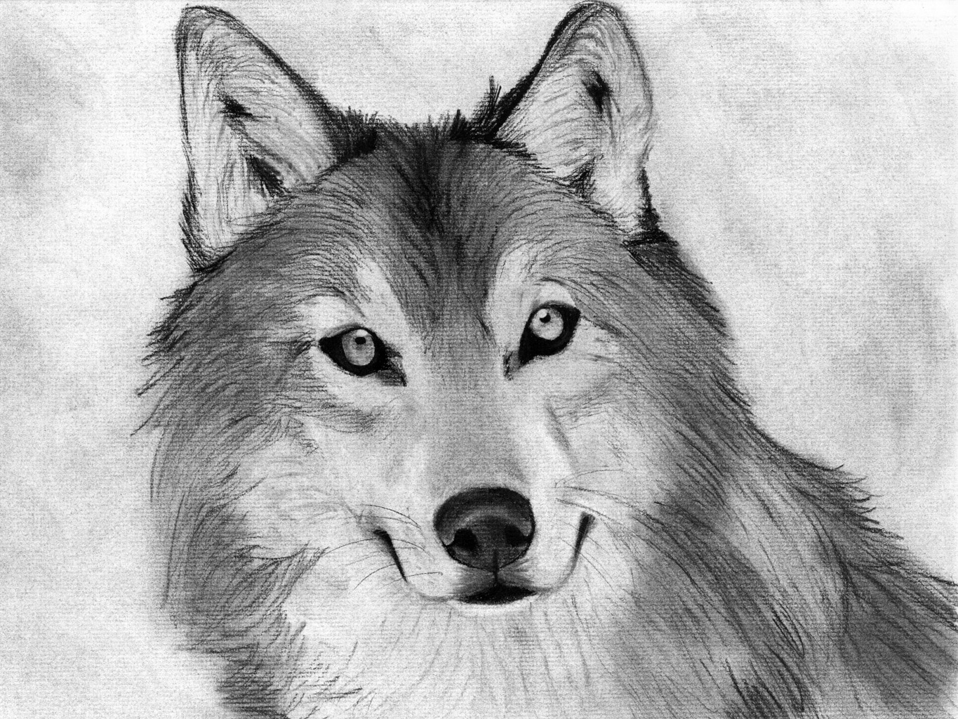 Drawn amd charcoal Google drawing animals animals Search