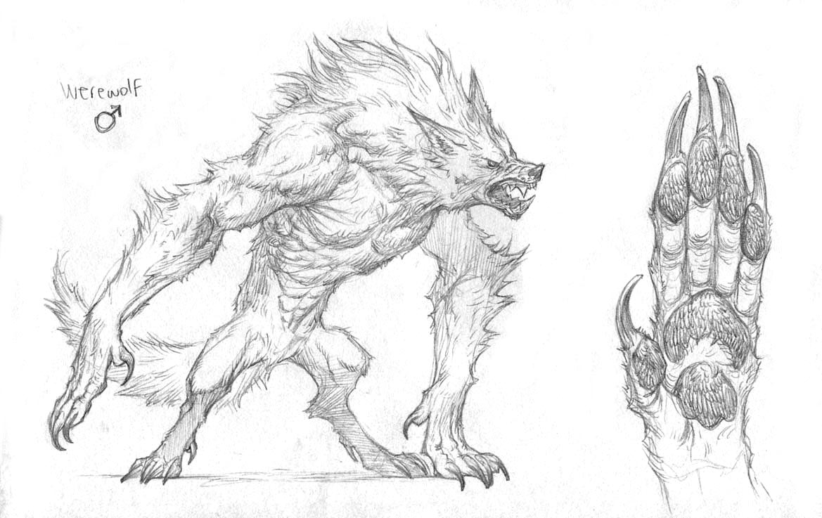 Drawn werewolf character creation #1
