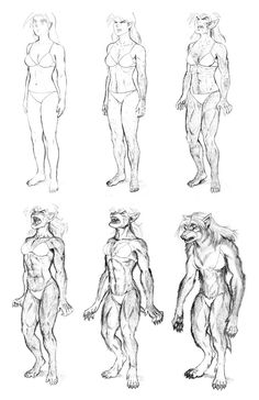 Drawn werewolf character development By  dirktiede DevelopmentUnderworldFull Body