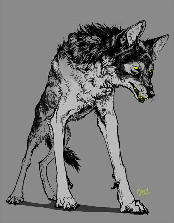 Drawn werewolf character development 68 best Pinterest AnatomyCharacter Wolf