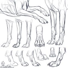 Drawn werewolf character model CHARACTER girls forepaws drawing wolf