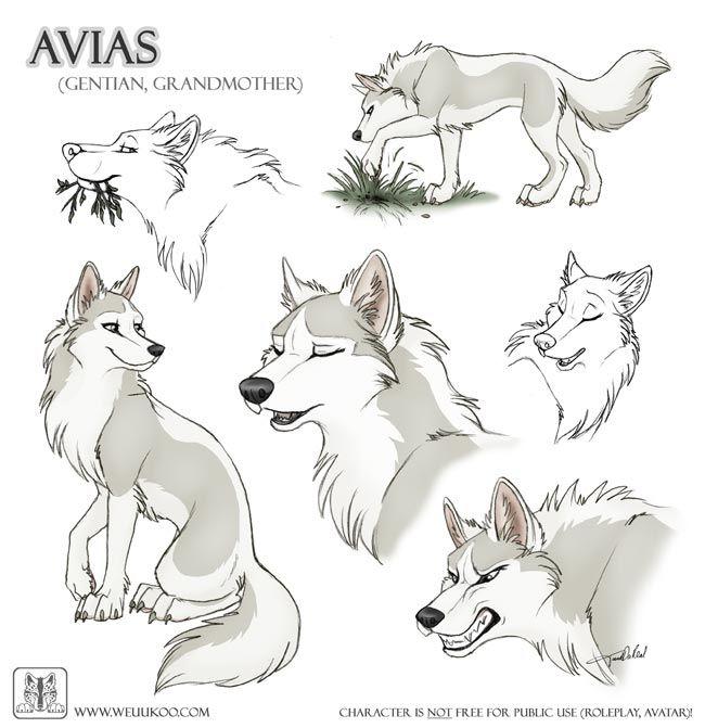 Drawn werewolf character model TaniDaReal wolf Avias 20+ Cartoon