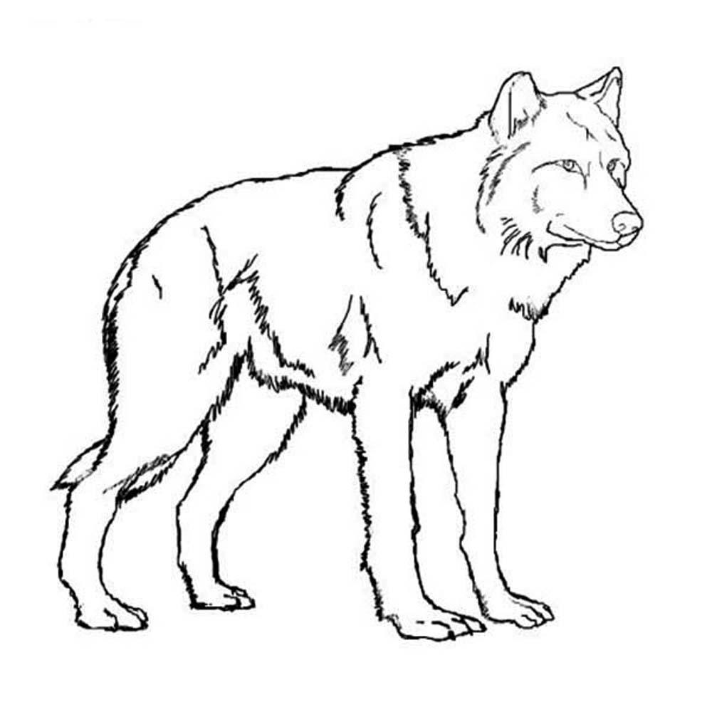 Drawn werewolf coloring page Pinterest pages Wolf Story coloring