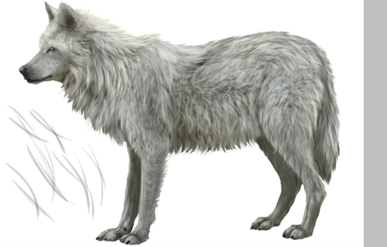 Drawn werewolf different 12 PSDFan Realistic How Step