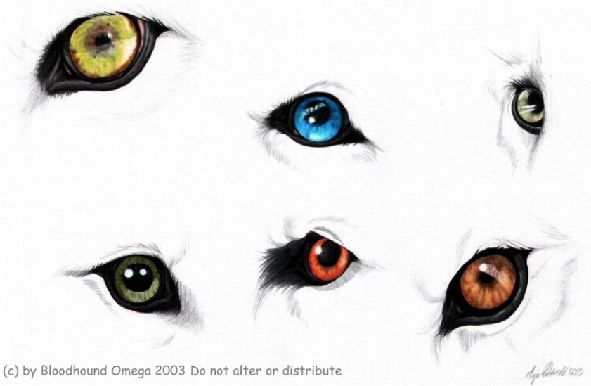 Blue Eyes clipart nose *BloodhoundOmega ideas wolf Drawing on
