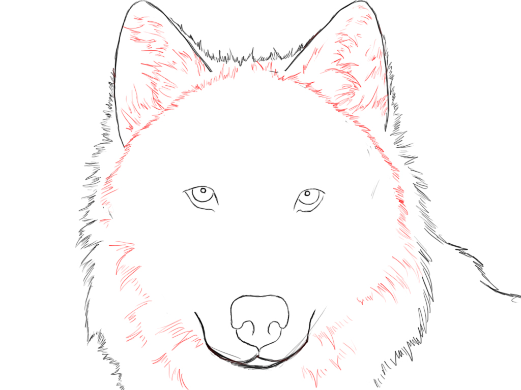 Drawn werewolf face How To Central Wolf Draw
