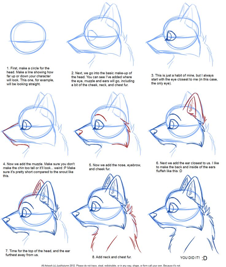Drawn werewolf first Wolf drawing Best Pinterest how_to_draw__canine_profile_tutorial_by_justautumn