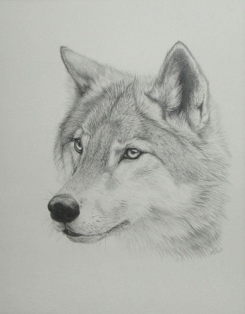 Drawn werewolf found Images Wolf Lover  Pinterest
