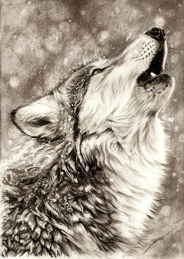 Drawn werewolf found Drawing here  fur drawing