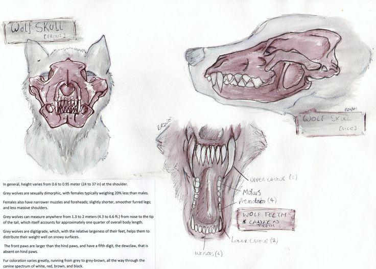 Drawn werewolf human Best images Anatomy: on Pinterest