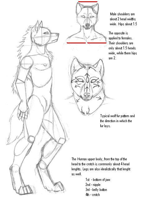 Drawn werewolf human On Pinterest wolf Werewolf Male