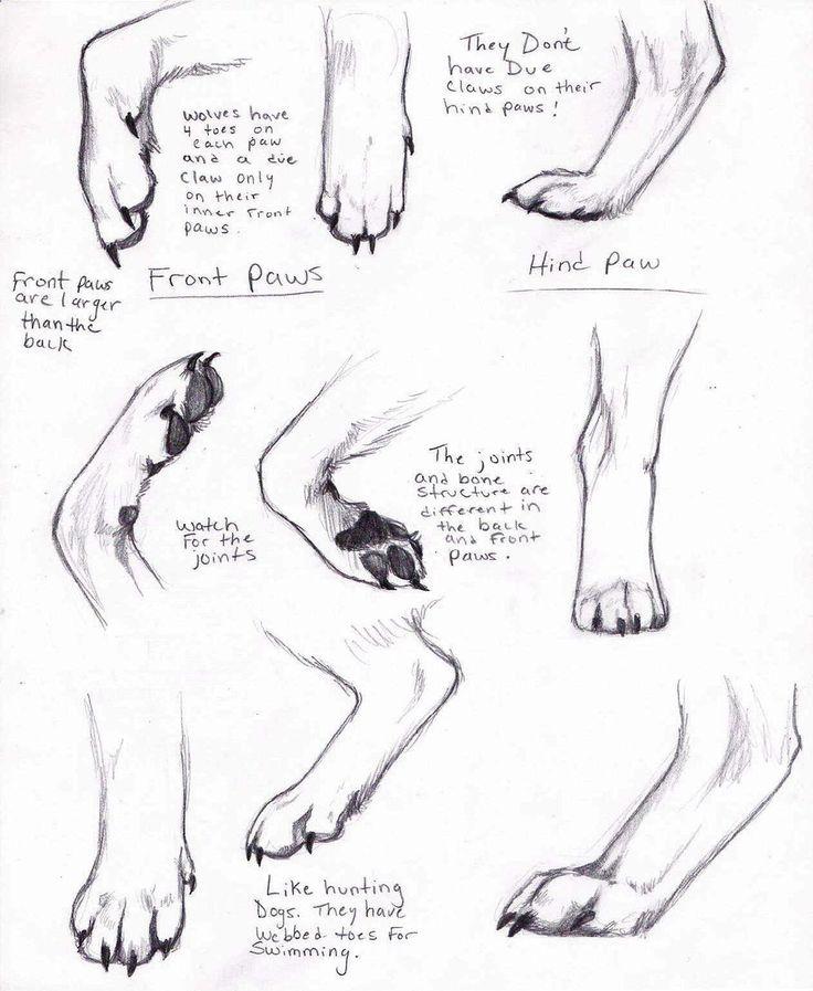 Drawn werewolf human Draw Wolf this AnimalParts Pinterest