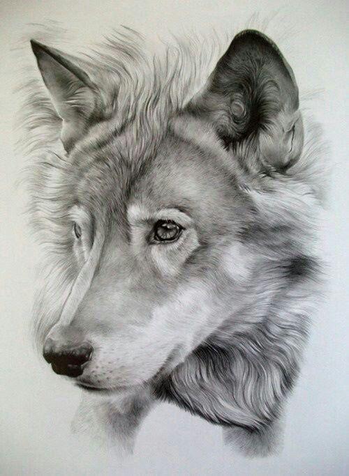 Drawn werewolf majestic On Pinterest Majestic images 478