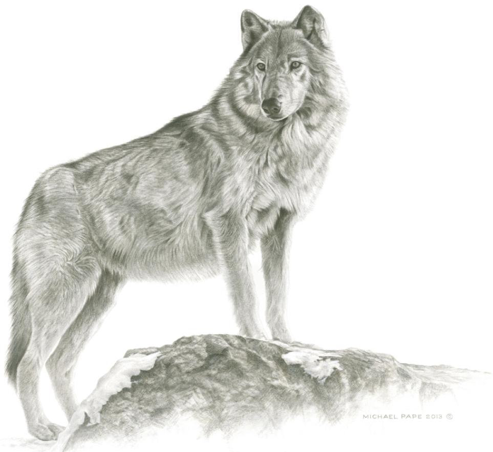 Drawn werewolf majestic Sold Limited Maikan pencil wildlife