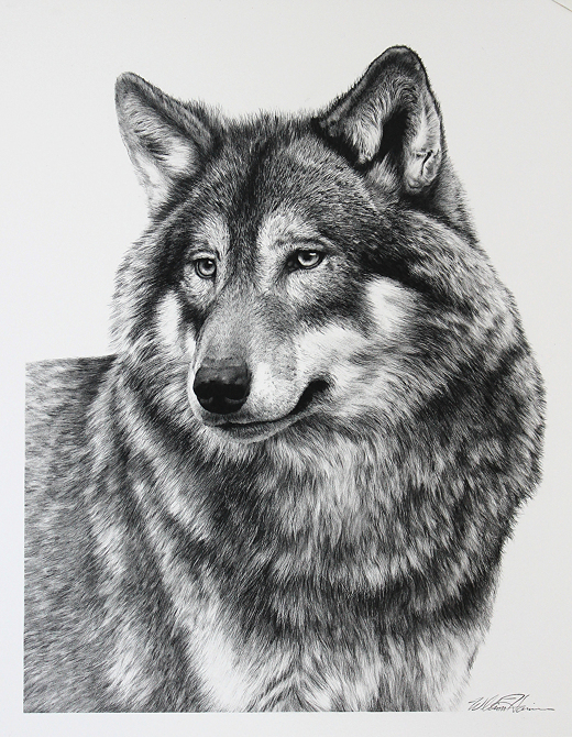 Drawn werewolf majestic Wildlife Design 14 Bill Blog