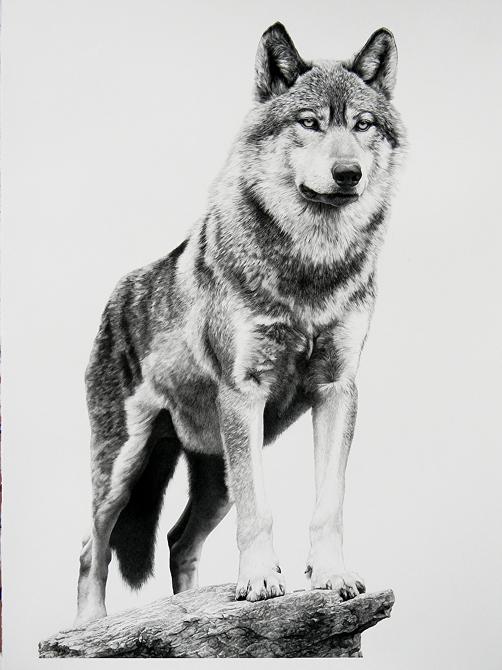 Drawn werewolf majestic Wildlife 100 01 Bill Tattoos