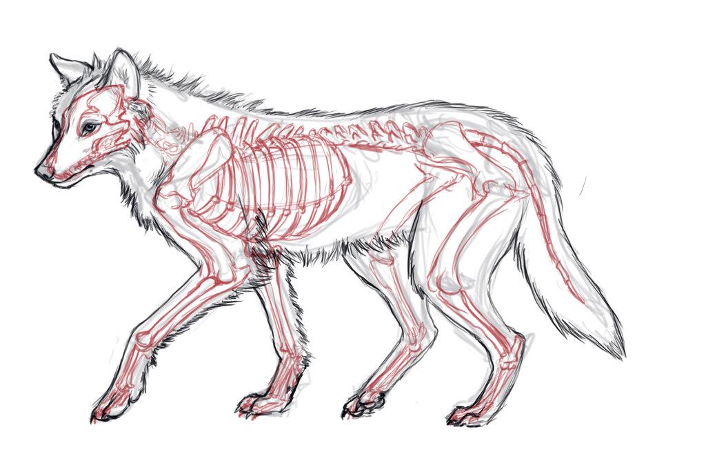 Drawn werewolf muscle Anatomy Anatomy anatomy Pinterest Pinterest