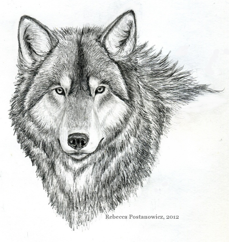 Drawn werewolf pencil drawing Drawings drawings Drawings Pencil Pencil