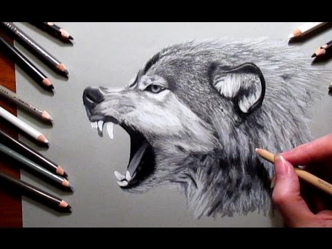 Drawn werewolf pencil drawing Pencil a Jasmina wolf Wolf