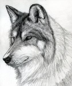 Drawn werewolf pencil drawing By Wolf wolf a Step