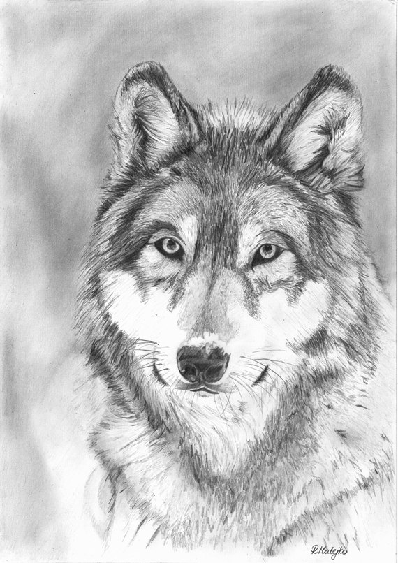 Drawn werewolf pencil drawing 00 £25 Drawing  Graphite