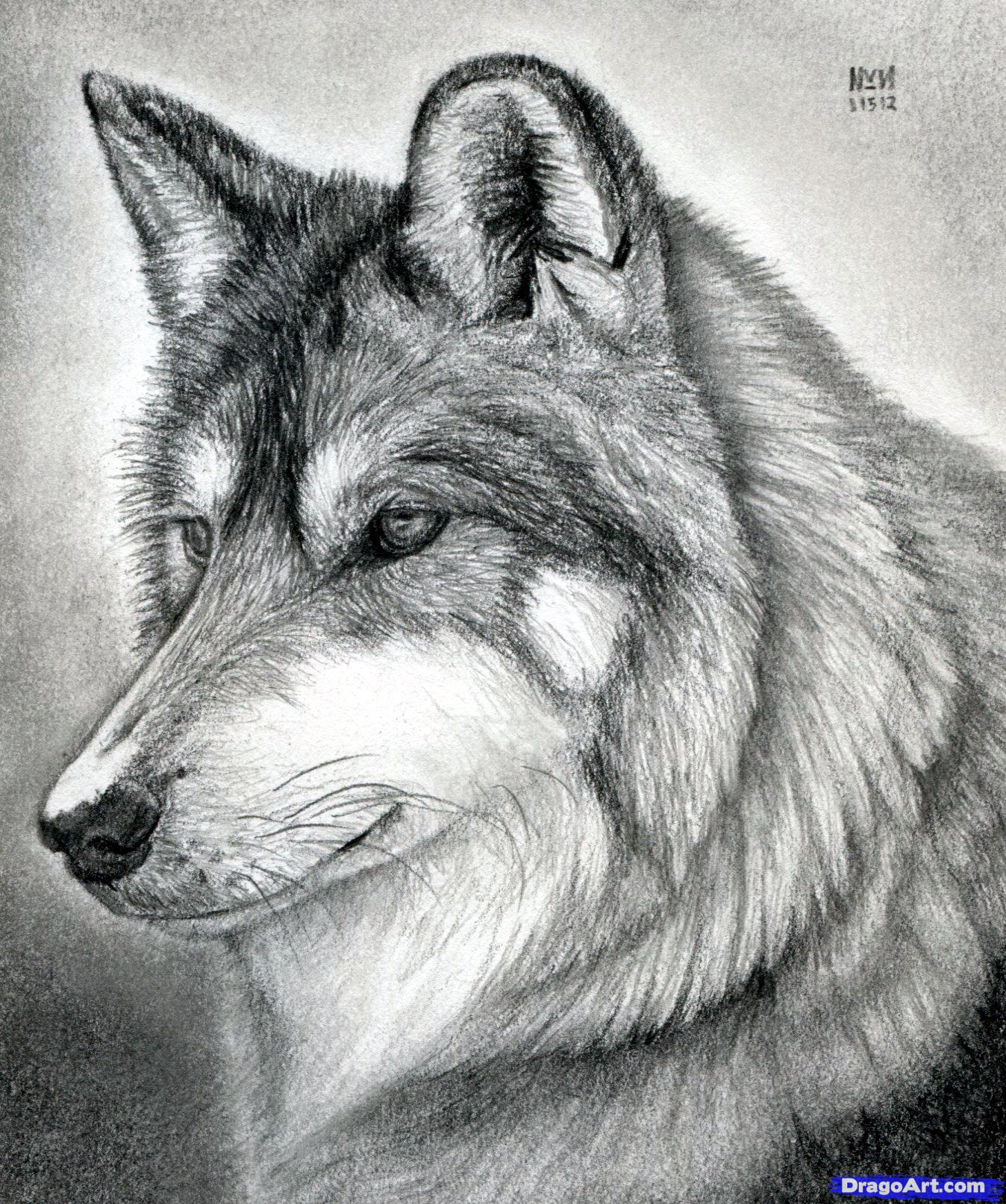 Drawn werewolf pencil drawing Wolf a wolf on realistic